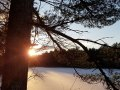20181207_sunset-over-SP-inlet-pine-silhouette-vertical