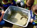 20190604_students-looking-at-alewife-in-tank