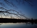 20191109_maple-silhouette-over-pond